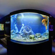Krakenaquarium